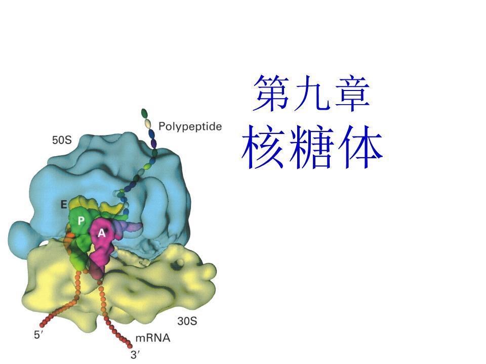 涡虫结构示意图名称