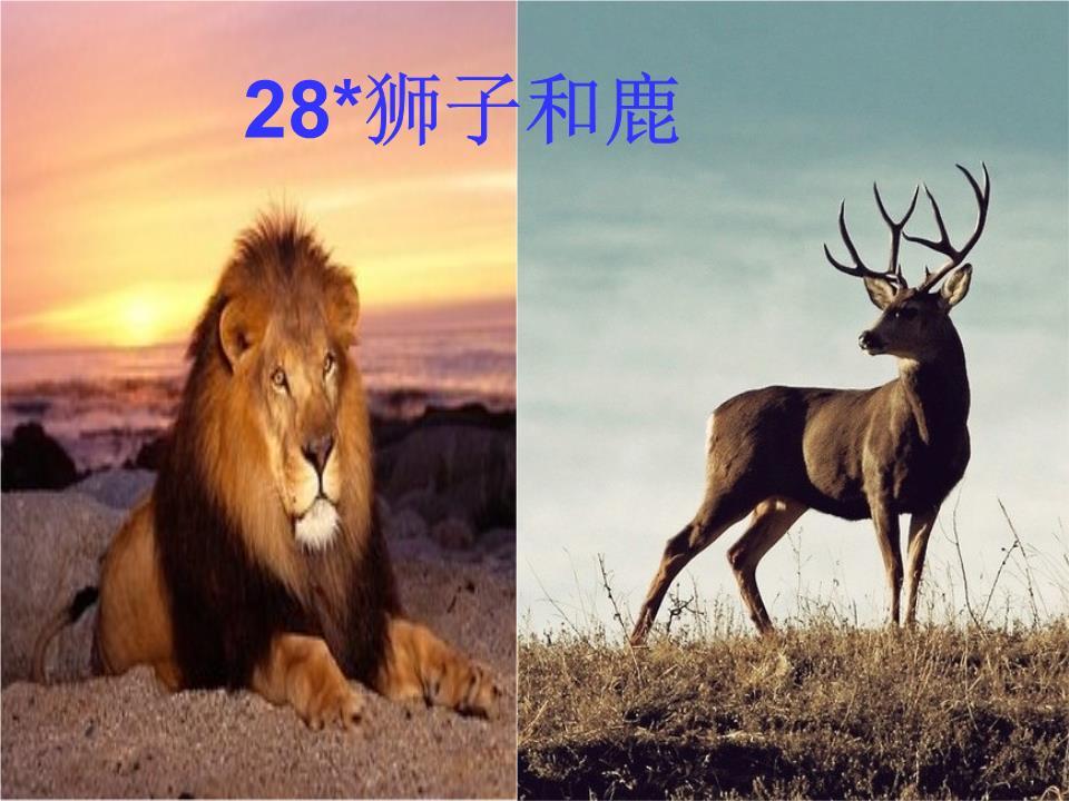 28 狮子和鹿 公开课 .ppt