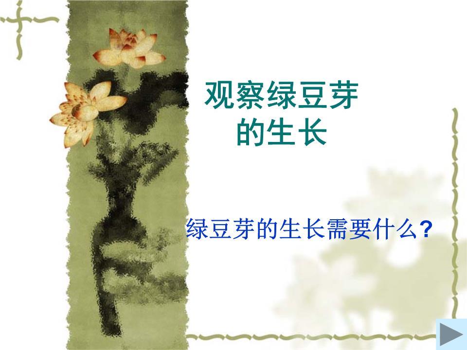 3观察绿豆芽的生长. 精 .ppt