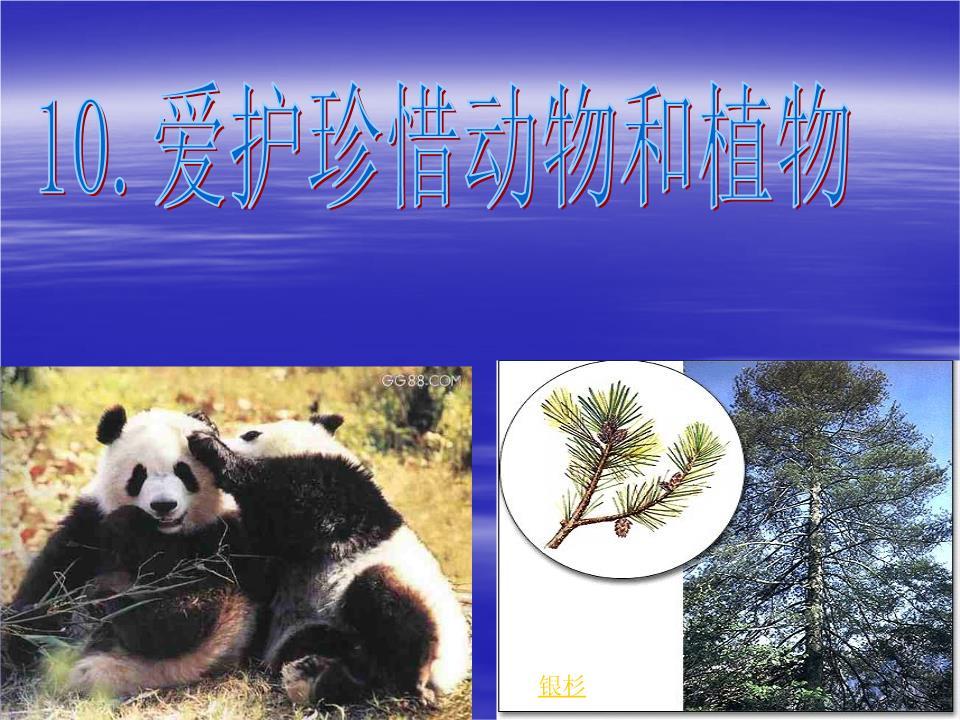 爱护珍惜动物和植物课件.ppt