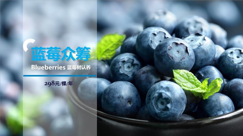 蓝莓树.ppt