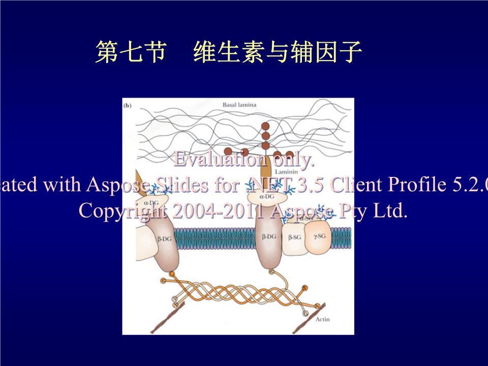南京农业大学生物化学演示课件16.ppt