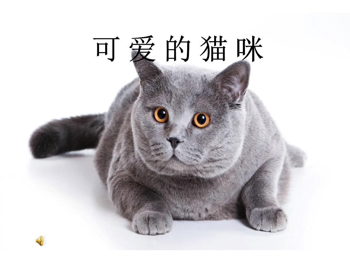 《17可爱的猫咪课件》小学美术浙人美2011课标版二年级下册课件.ppt