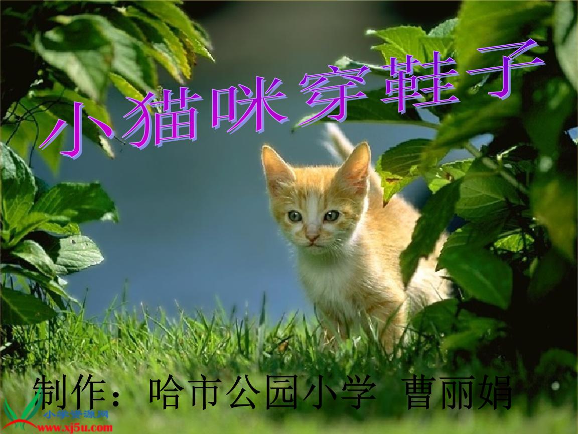 教科版二年级语文下册小猫咪穿鞋子课件_1.ppt